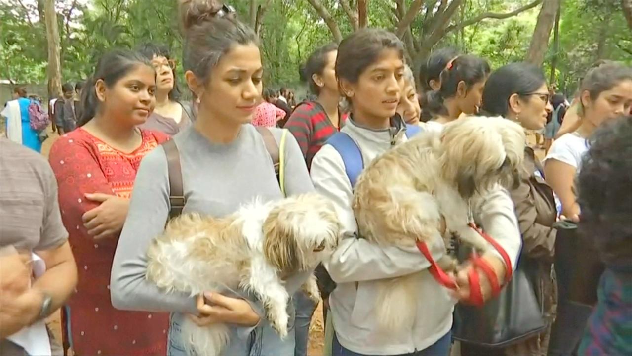 В Индии протестуют против правила «одна квартира – одна собака»