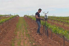 Старейшие виноградники Испании оснастили технологиями