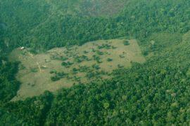Вырубка леса в обширной саванне Бразилии в 2017 году ускорилась