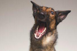 Как испанский фотограф помогает приютским собакам найти дом