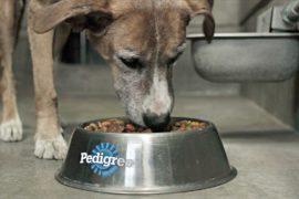 Фонд «Львиная доля» будет собирать пожертвования с рекламы с животными