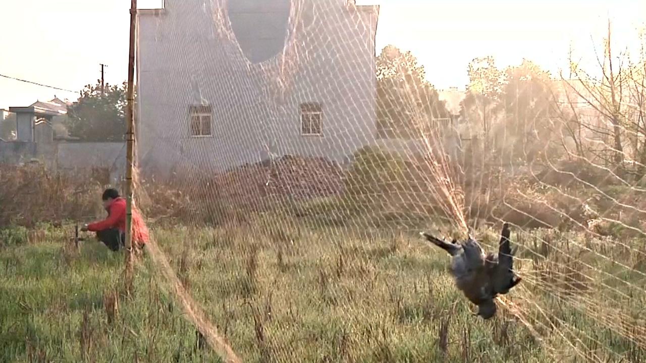 Перелётные птицы гибнут в Китае из-за необузданного браконьерства