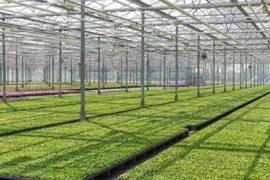 Качественная система отопления зимнего сада