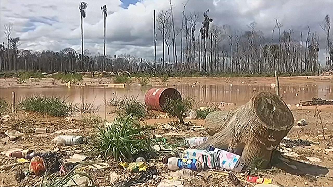В Перу научились быстро реагировать на вырубку леса