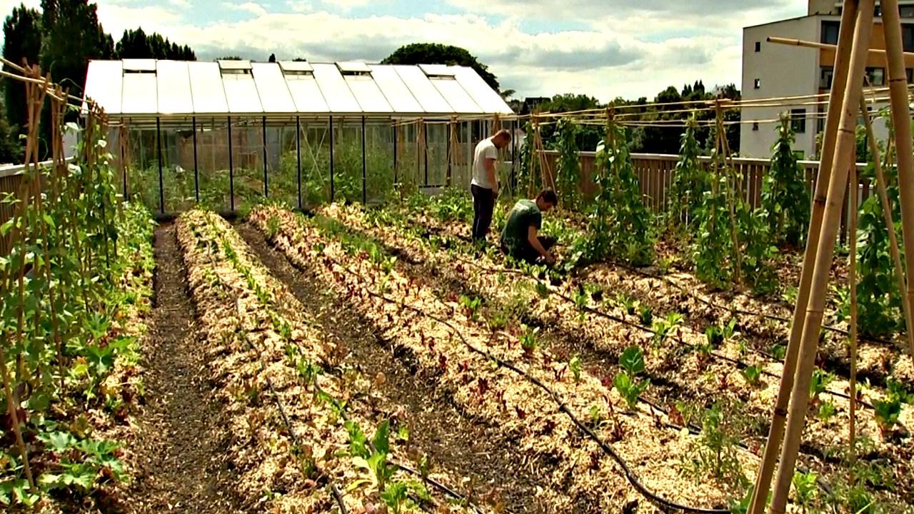 Супермаркет в Бельгии выращивает овощи на собственной крыше