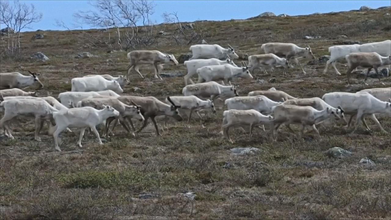 Оленеводы и рыбаки самого северного региона Норвегии выступили против рудника «Нуссир»