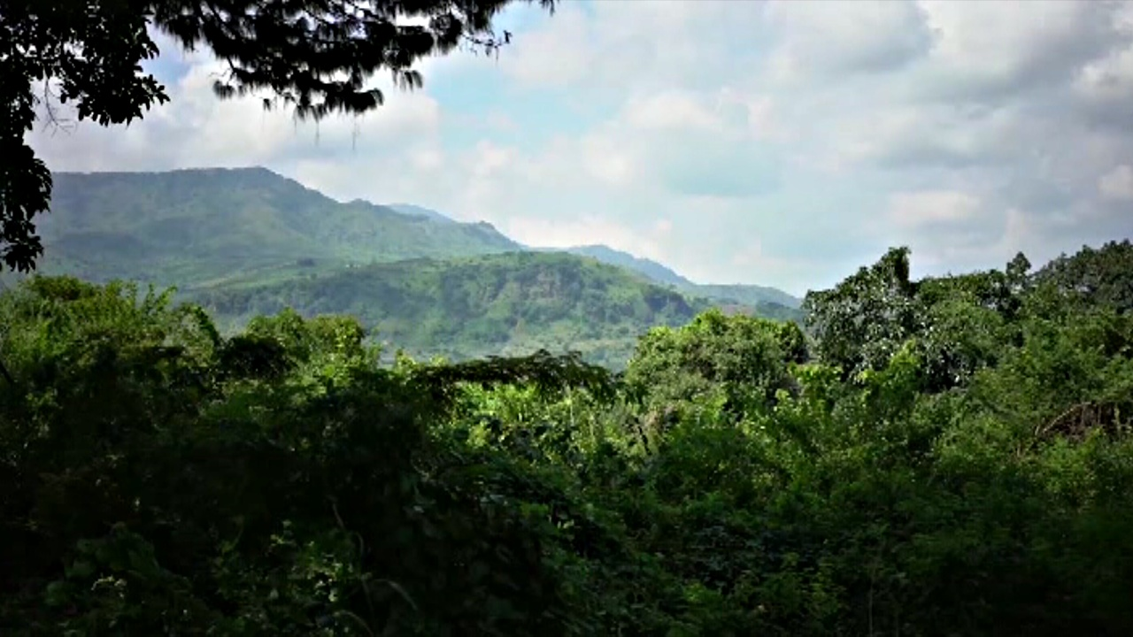 В Мозамбике выращивают кофе, чтобы спасти от гибели лес