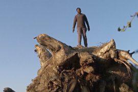 В Африке погибают тысячелетние баобабы