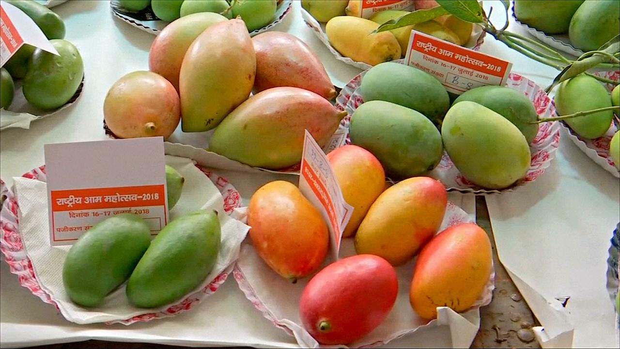 На фестивале в Индии показали более 300 сортов манго