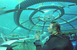 Травы и овощи выращивают под водой в Италии