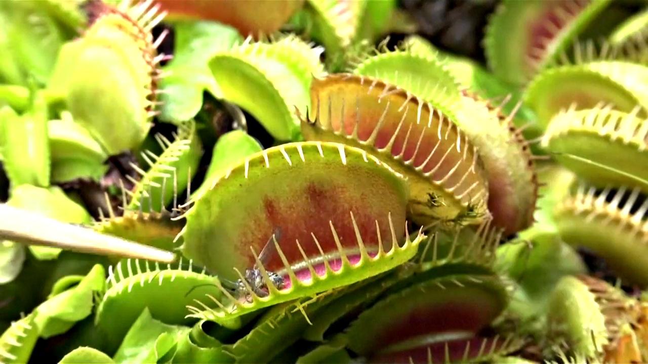 Хищные растения представили на выставке в Боготе