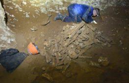 В крымской пещере нашли кости древних слонов и носорогов