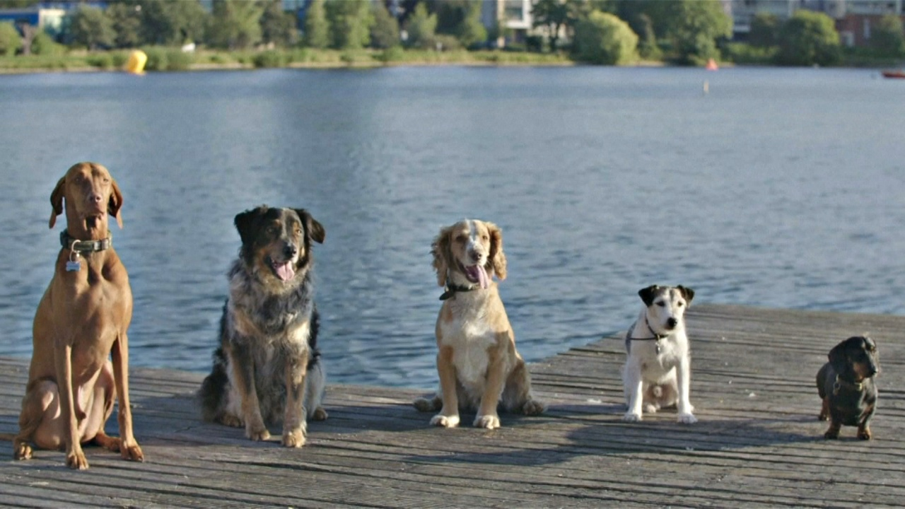Собачьи купания устроили на лондонском озере