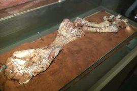 Учёные: гигантские динозавры жили на 30 млн лет раньше, чем считалось