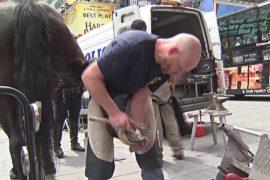 В Нью-Йорке полицейских коней подковывают прямо на улице