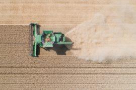 Немецкие фермеры ожидают больших потерь из-за длительной засухи