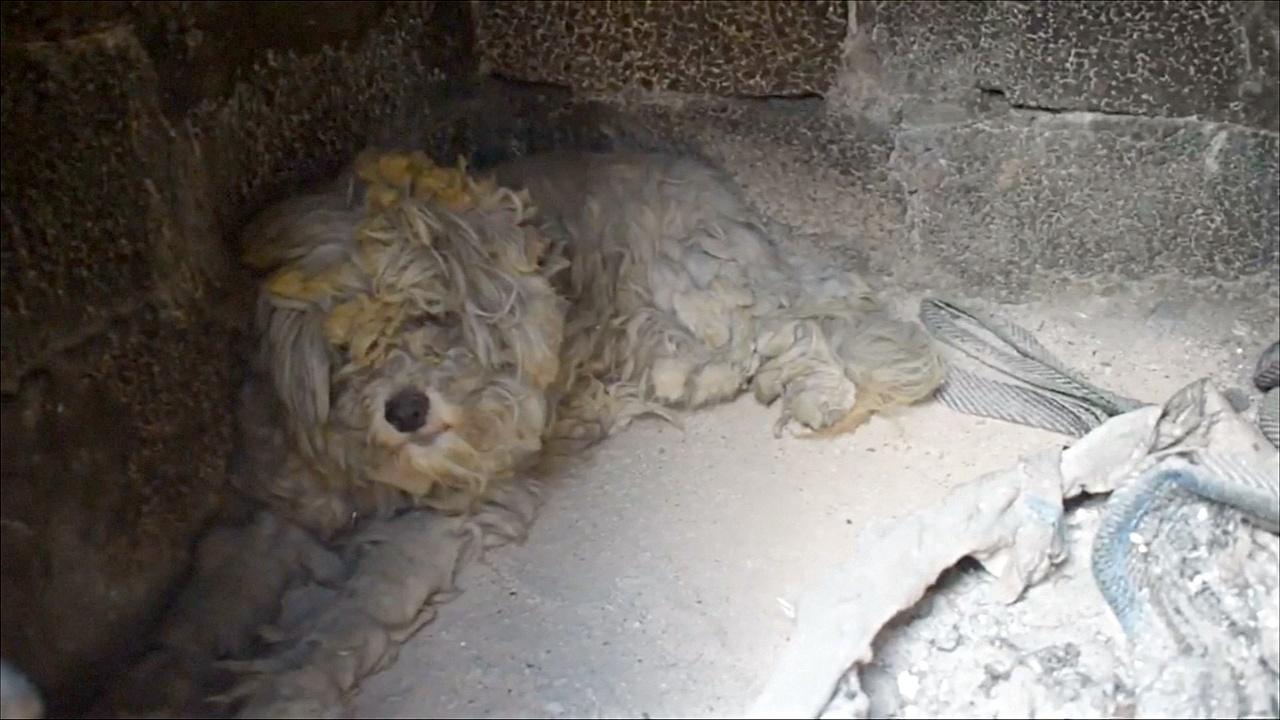 В ожогах и пепле: на месте пожара в Греции нашли уцелевшую собаку