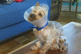 Жительница Нью-Йорка создаёт мини-копии собак