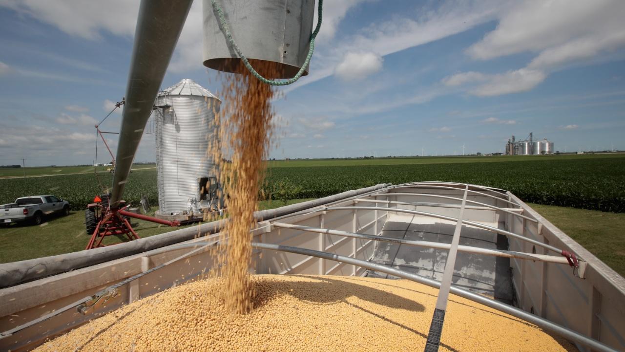 Еврокомиссия объявила, что увеличила импорт сои из США