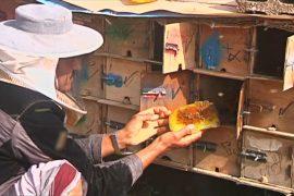 Йеменским пчеловодам угрожают авиаудары и мины