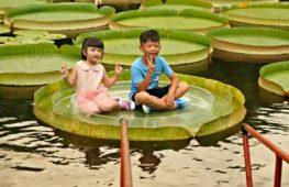Сфотографироваться на листе гигантского лотоса можно в парке Тайбэя