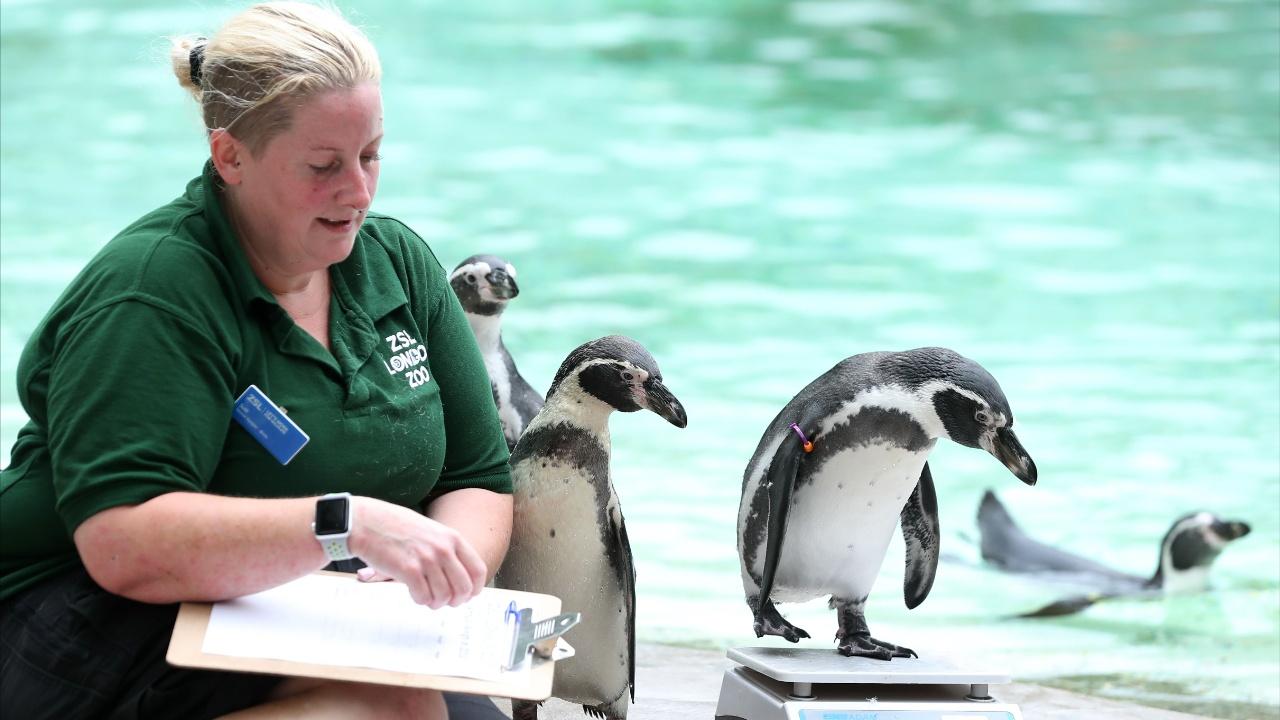 Все на весы: как измеряли животных в зоопарке Лондона