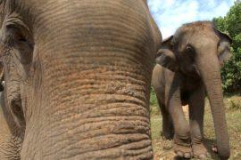 Стадо слонов напало на деревню в поисках еды