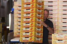 Коробка, которая изменила жизнь тысяч фермеров Австралии