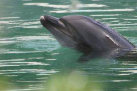 Японцы требуют спасти дельфина, брошенного в закрывшемся аквапарке