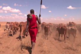 Приложение ищет кенийским фермерам воду и пастбища