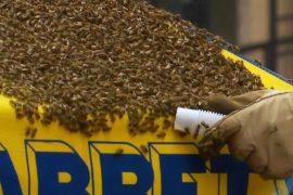 Таймс-сквер оцепили из-за нашествия пчёл