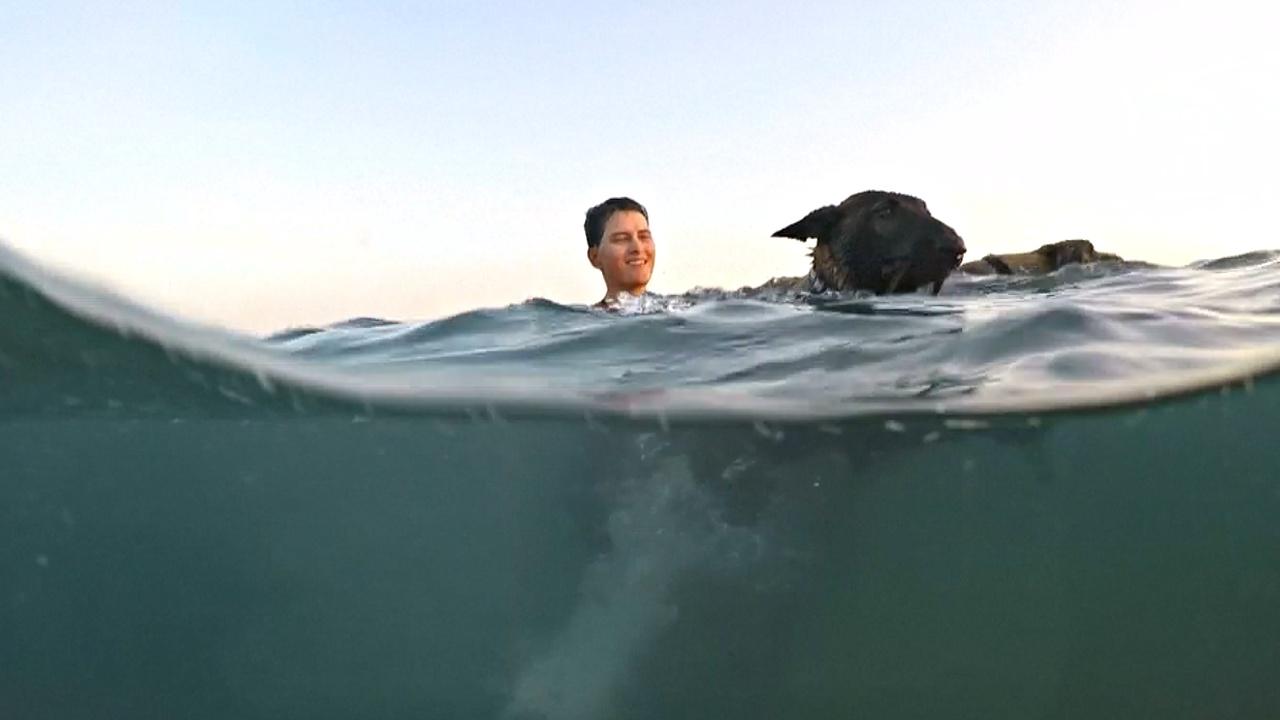 Как собаки и их хозяева покоряли море в Хорватии