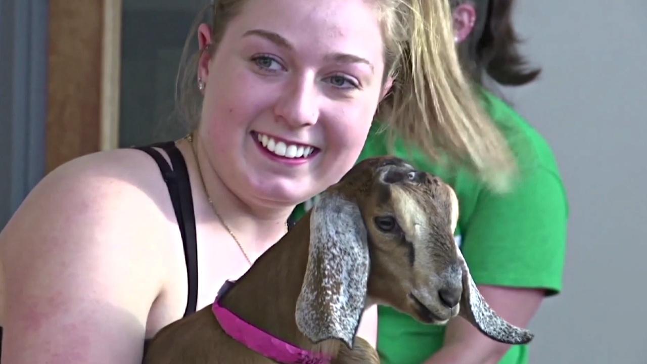 Улыбайтесь козам, и они вас полюбят
