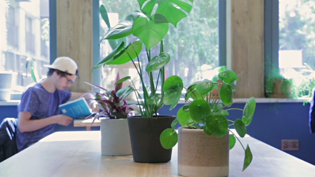 Отели ищут инновационные способы защитить окружающую среду