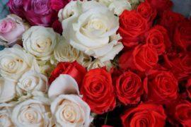 Экварозы для цветочного магазина