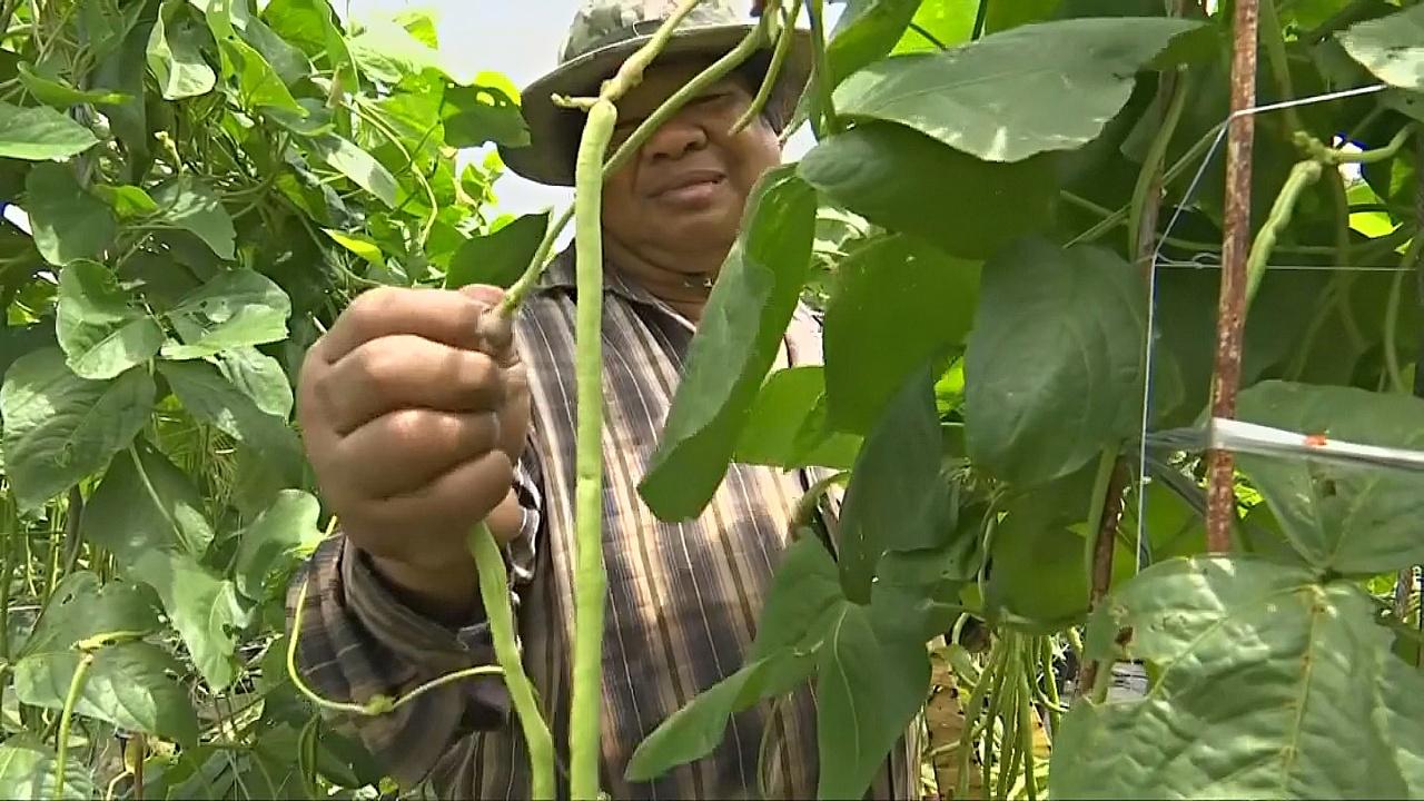 Тайский фермер отказывается от богатства ради «работы мечты»
