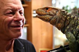 Француз держит дома 400 рептилий