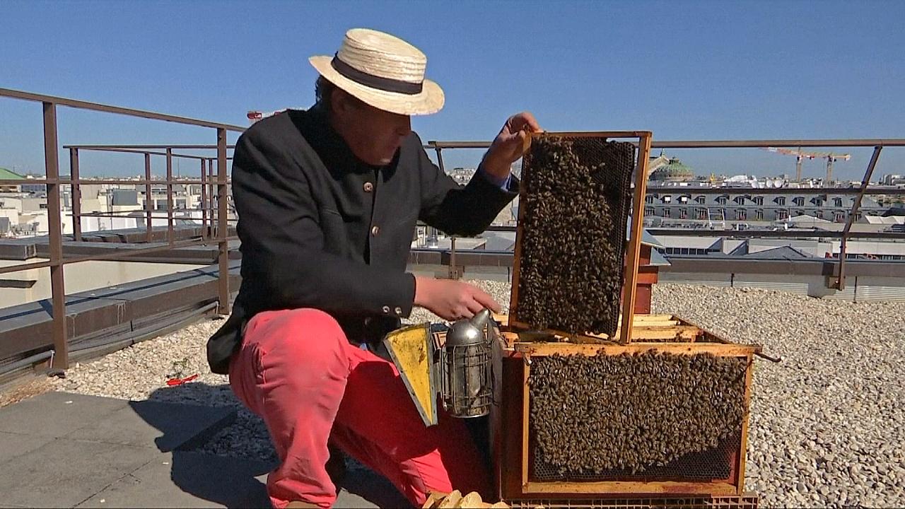 Чем Париж привлекает пчеловодов