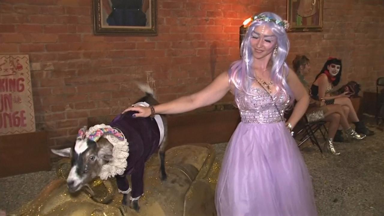 Зачем козлики ходят на вечеринки в Лос-Анджелесе