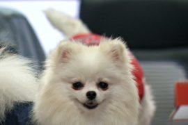 Собака в офисе: как в Таиланде снимают стресс на рабочем месте