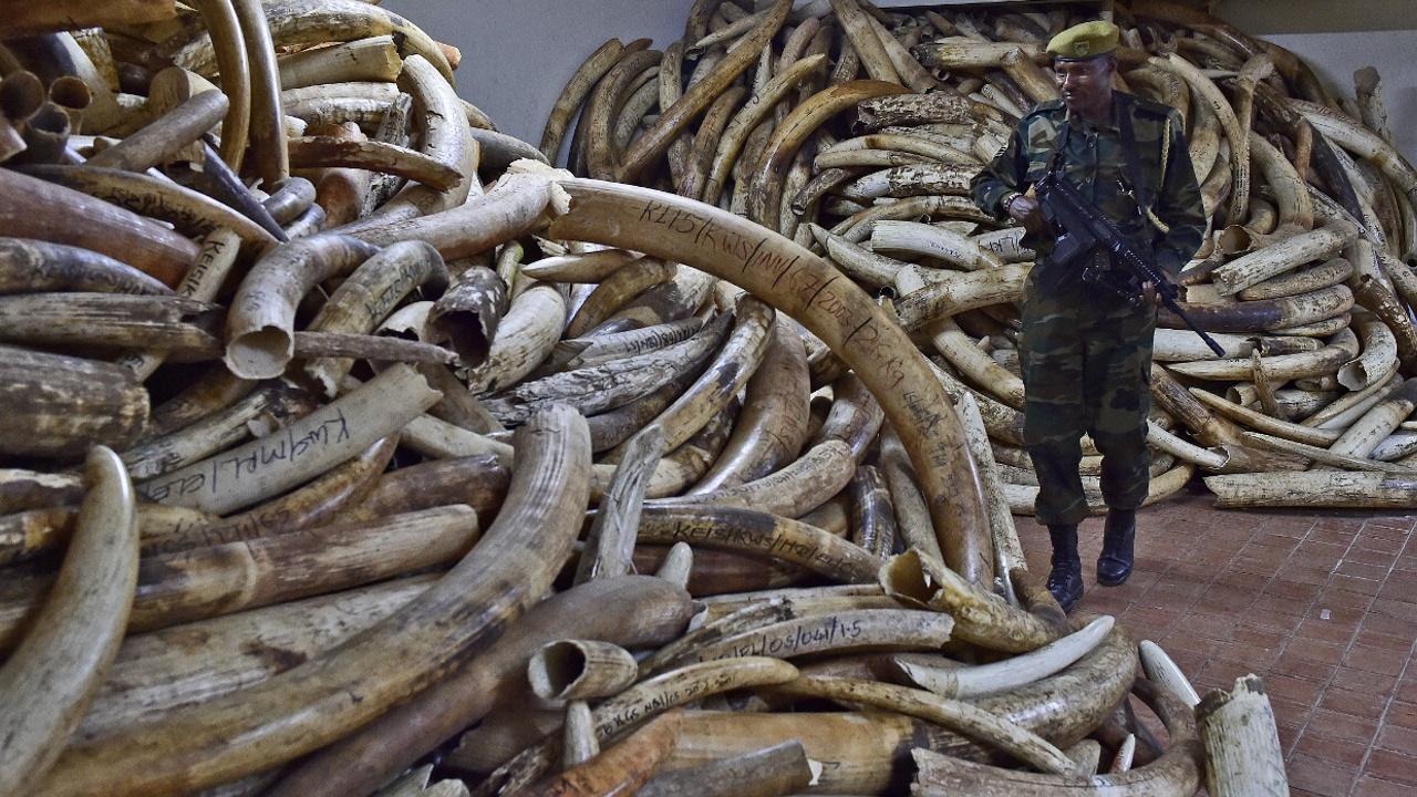 Продажа слоновой кости