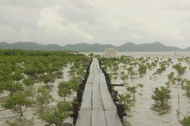 Мангровым лесам Камбоджи угрожает строительство