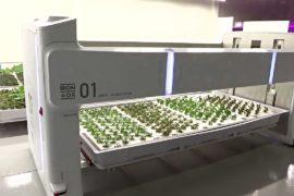 Робот выращивает зелень на ферме в Силиконовой долине