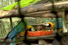 Центр в Перу спасает редких животных от незаконной торговли