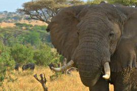Заповедник в Танзании охраняет высокотехнологичная система наблюдения