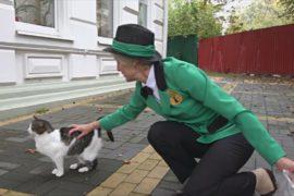 В Зеленоградске наняли на работу котошефа для заботы о кошках