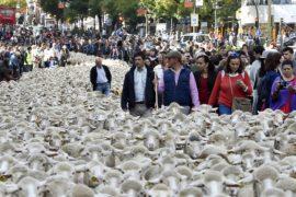 Автомобили в Мадриде уступили место овцам