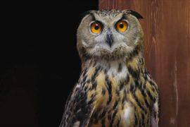 «Шумное меню»: пообщаться с совами предлагает антикафе в Москве