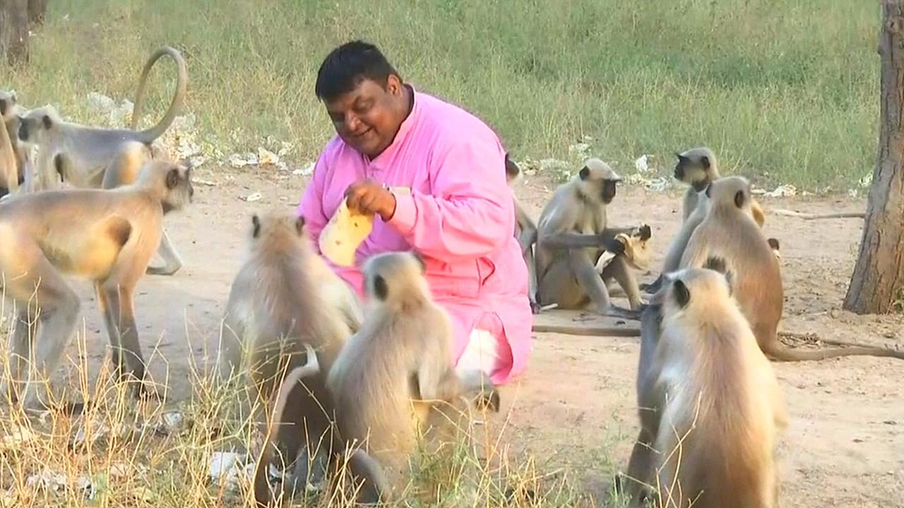 Индийский ювелир 10 лет подкармливает стаю обезьян