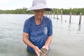 Рыбные фермы угрожают мангровым лесам острова Борнео